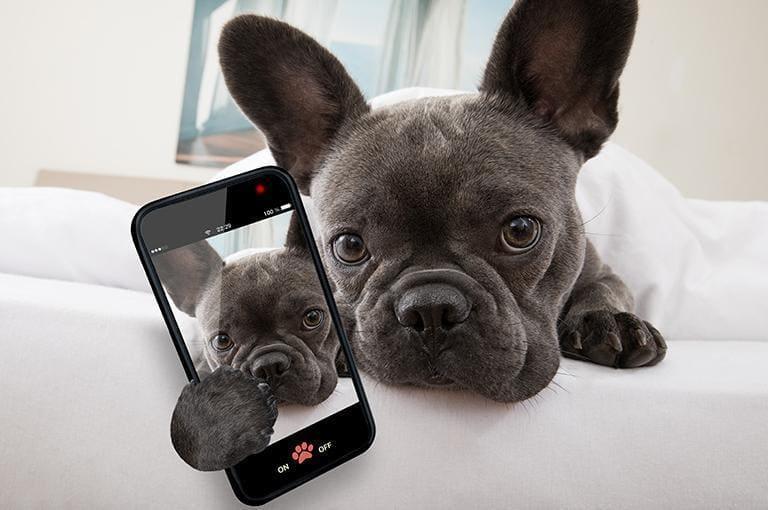 Pies ztelefonem